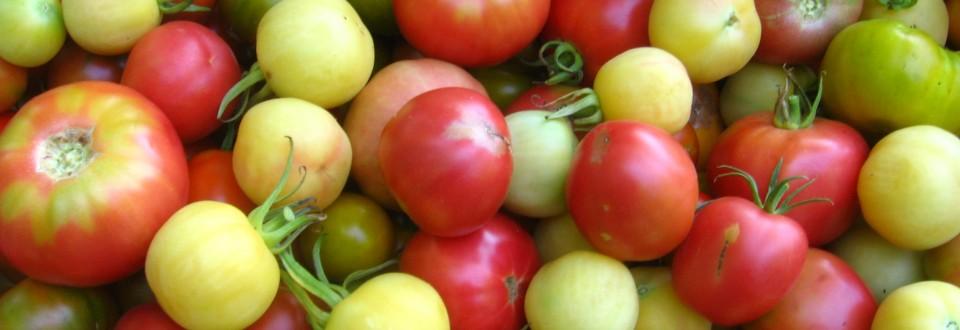 tomates multi
